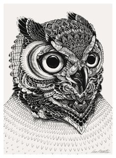 Owl portraits on Behance #mccarthur #iain #owl