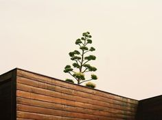 Photography by Daniel Seung Lee   Professional Photography Blog #inspiration #photography