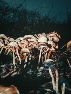 Photograph by Pale Grain #print #denmark #photograph #nature #mushrooms #faaborg