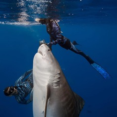 Incredible Underwater Photography by Juan Oliphant