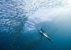 Underwater Photography by Alexander Safonov