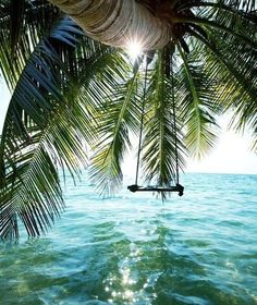 Paradise swing #ocean #palm #tree #paradise #swing