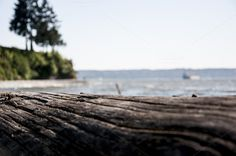 Woody Perspective ~ Nature Photos on Creative Market #field #perspective #depth #of #summer #beach #macro