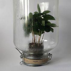 #plant #bottle
