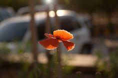 IG096 #flower #against #small #sunlight
