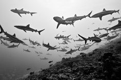 My Tumblr #ocean #water #depth #school #fish #sharks #sea #photography #nature #swim