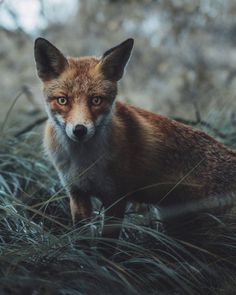 Dreamlike Animals Portrait Photography by Remo Jacobs