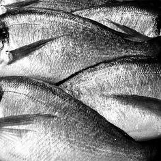 Toutes les tailles | sea bream | Flickr: partage de photos! #photography #fish #silver