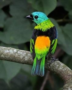 #kings_birds: Beautiful Bird Photography by Celso de Castro