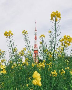 Beautiful iPhoneography by Ryoji Iwata