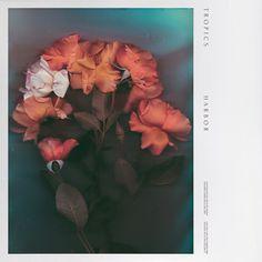 samuel burgess johnson, album, album art, album cover, roses