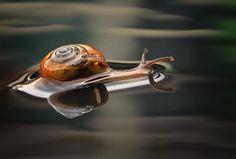 Amazing Macro Photography by Shikhei Goh   Cuded