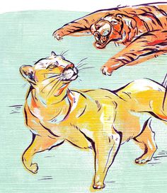 wilderness_JOakley_cougar_cls #lion #bold #illustration #cats #attack #tiger