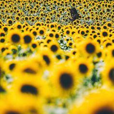 Stunning Instagrams by Aaron Pennington