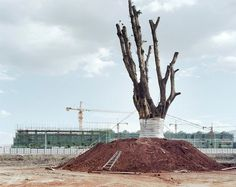 Yan Wang Preston's best photograph: a Chinese village's ancient tree – sold for $25,000 | Art and design | The Guardian