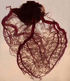 "loveyourchaos: ""The human heart stripped of fat... - VIVRE ! #heart #human #blood #tree"