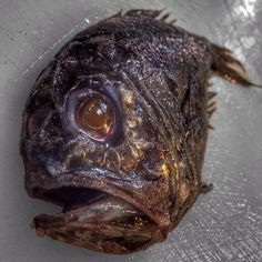 Russian Deep-Sea Fisherman Roman Fedortsov Photographs His Terrifying Catches