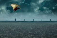 Voiceless by Rebeca Saborío #inspiration #photography #animal