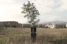 Regeneració - OOSS #tree #street #art #octavi #garbage #ooss