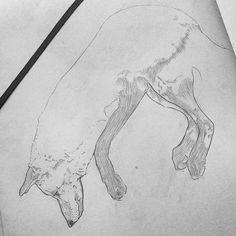Pencil, Sketch, Illustration, Dog, Micheal Hanly
