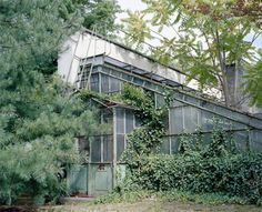 FFFFOUND! | nonclickableitem #plants
