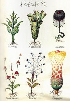 tumblr_llpogsyk531qdui5no1_400.jpg 400×574 pixels #plants #typography