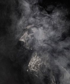 Faith is Torment | Art and Design Blog: Nice To Meet You: Photos by Martin Usborne #smoke #darkness #photography #portrait #animal #dog