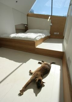atmosstudio #architecture #cat