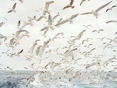 birds #seagul #water #air #seagull #birds #photography #sea #nature