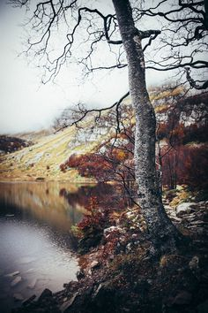 (2) Likes | Tumblr #autumn #old #river #tree