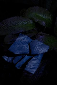 Strange PlantsPreview the botanical magazine's second volume #photo #plants