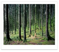 Prints : Guy Sargent #forest #photograph