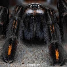 #kings_macro: Insect Macro Photography by Isaiah Rosales