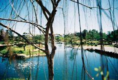 Japanese Garden : Dirty Swiss #swiss #pond #summer #swim #lake #dirty