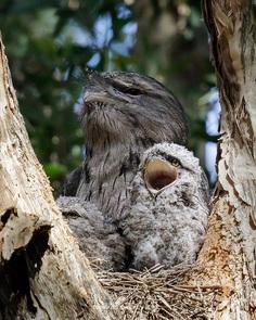 Breathtaking Wildlife Bird Photography by David Stowe