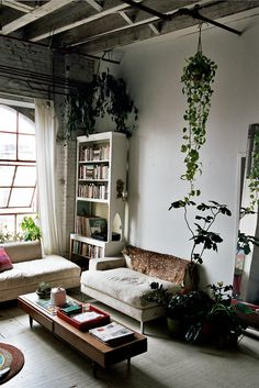 plants #interior design #photography