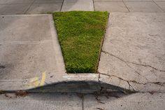microlawn #microlawn #photography #sidewalk