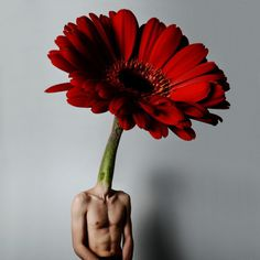 Brooke DiDonato #inspiration #photography #art #fine