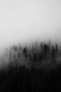 fog, photo, pines