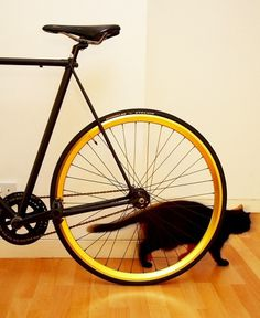 mark morrison - 10_10_08_Mark_Morrison3007 #photography #cat #bike
