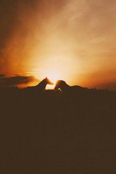 #horses #stockholm