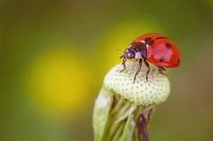 Beautiful Macro Flower Photography by Jeferson Silva Castellari