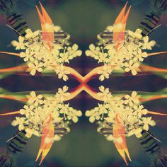 Givenchy Type Effect #bee #effect #floral #lovely #love #life #green