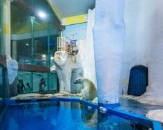 White Bear: Sheng Wen Lo Documents Polar Bears in 26 Sites Across Europe and China