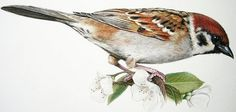 Ornitology on Illustration Served #illustration #bird