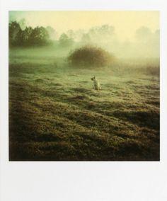 02.jpg (JPEG-kuva, 471×567 kuvapistettä) #field #polaroid #photography #tarkovsky #dog