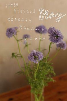 Miss Moss : 12 Flowers
