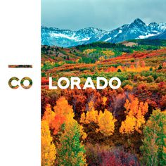 Photo credit: Peter Kunasz #tree #branding #serif #woods #fall #sans #colorado #photography #autumn #trees