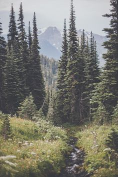 mountains and the trees