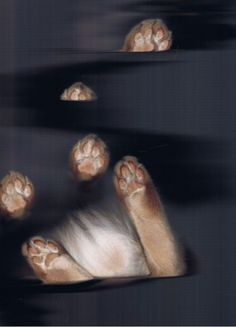 Buamai - The Cat Scan #feet #scan #cat